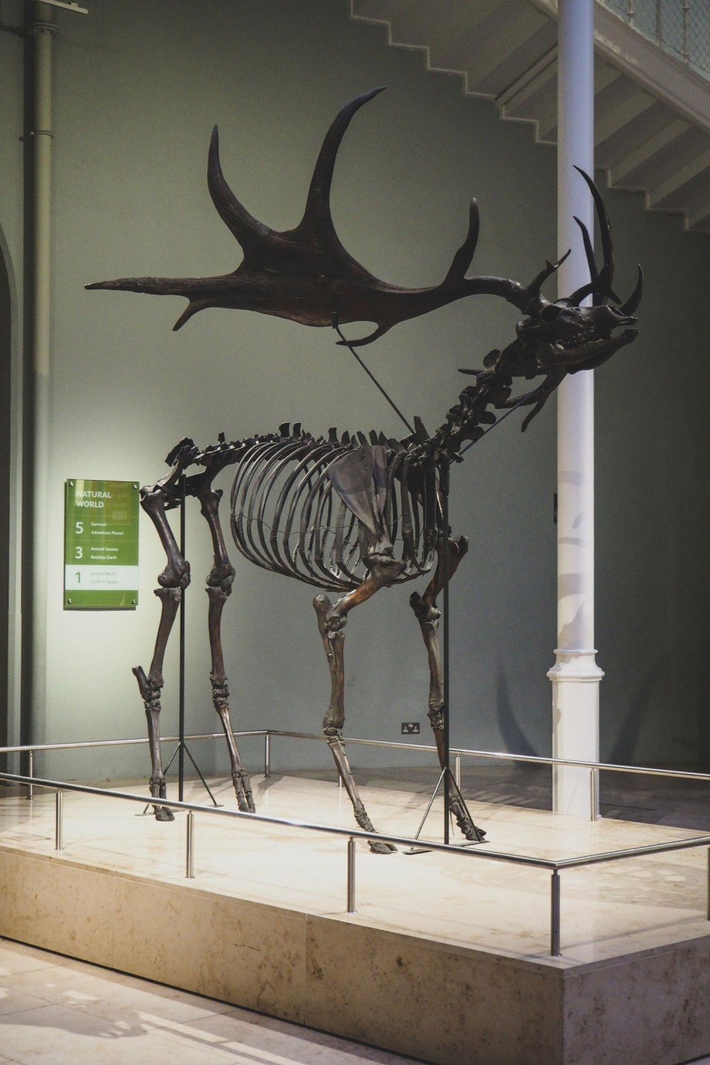 National-Museum-of-Scotland-Edinburgh (3)