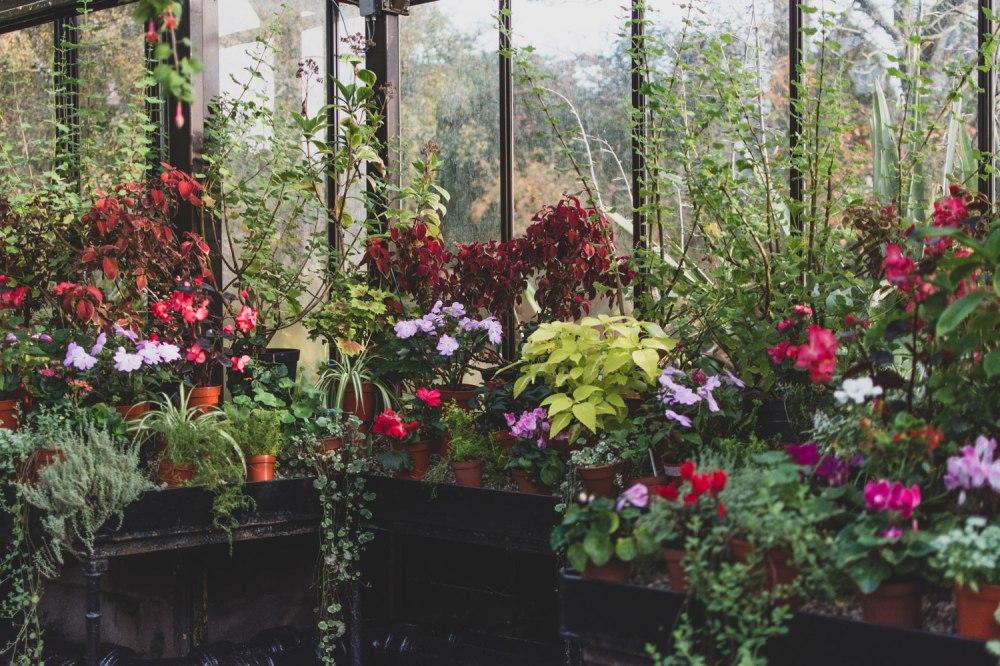 Glasgow-Botanic-Gardens (1)