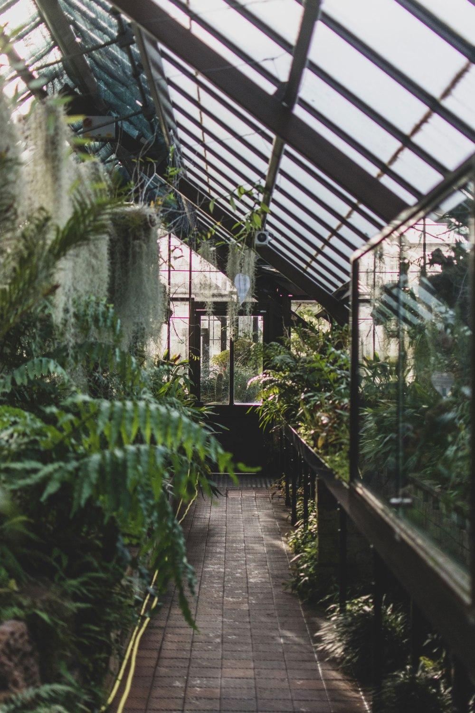 Glasgow-Botanic-Gardens (10)