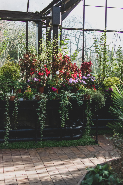 Glasgow-Botanic-Gardens (14)