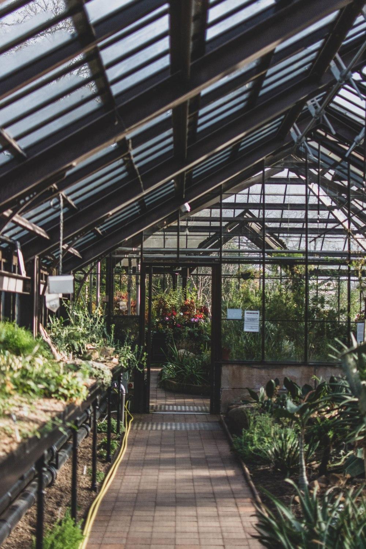 Glasgow-Botanic-Gardens (15)