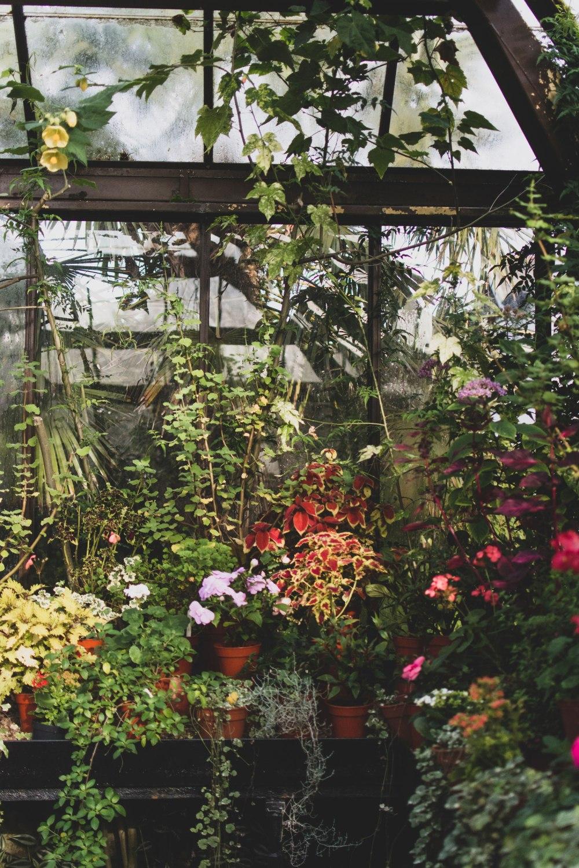 Glasgow-Botanic-Gardens (16)