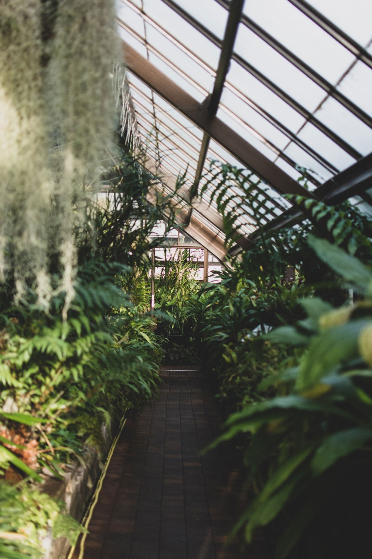 Glasgow-Botanic-Gardens (18)