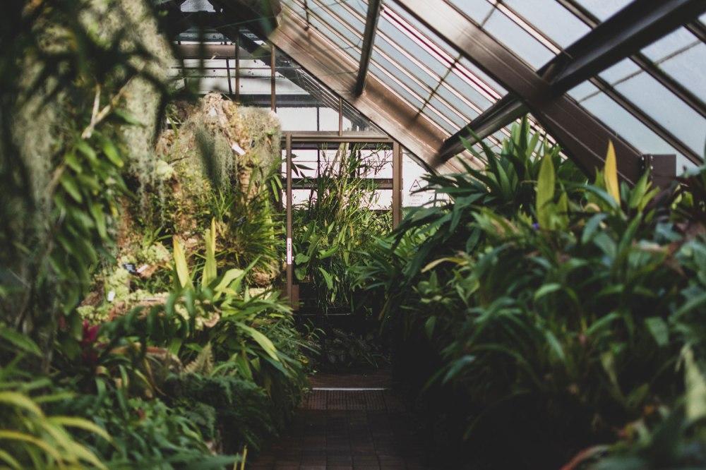 Glasgow-Botanic-Gardens (19)