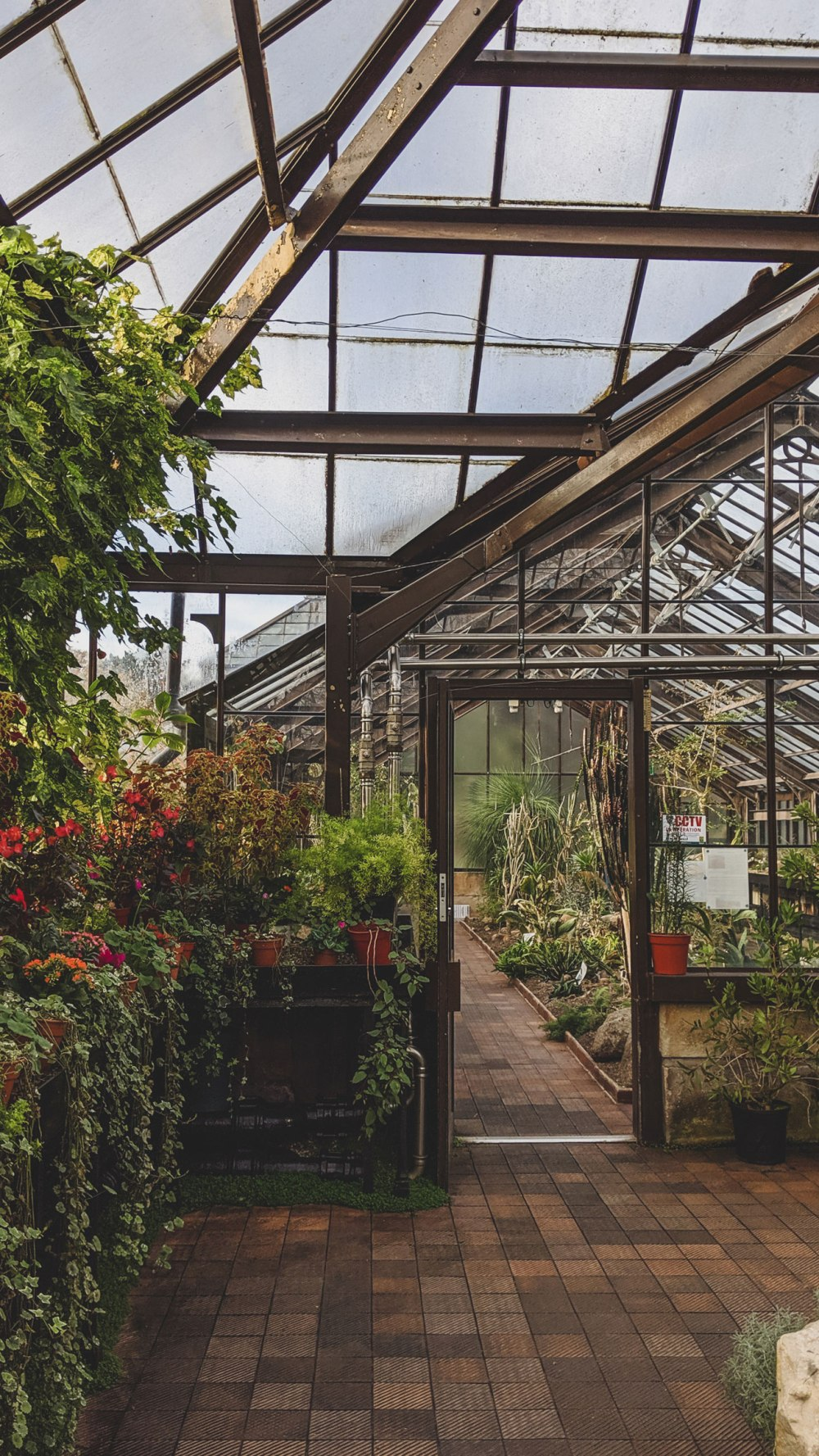 Glasgow-Botanic-Gardens (2)