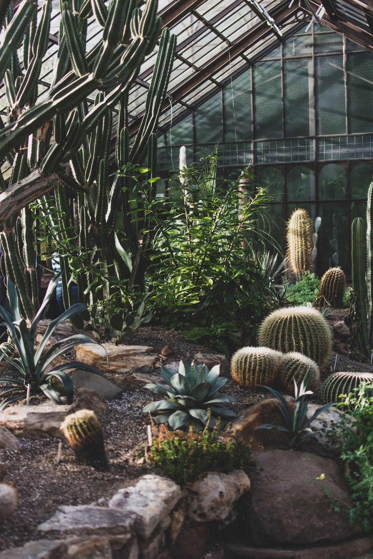 Glasgow-Botanic-Gardens (22)