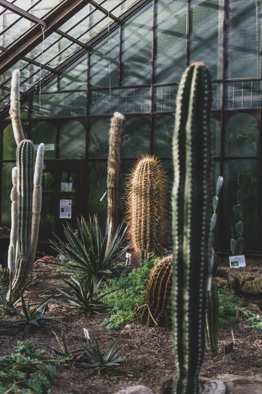 Glasgow-Botanic-Gardens (23)