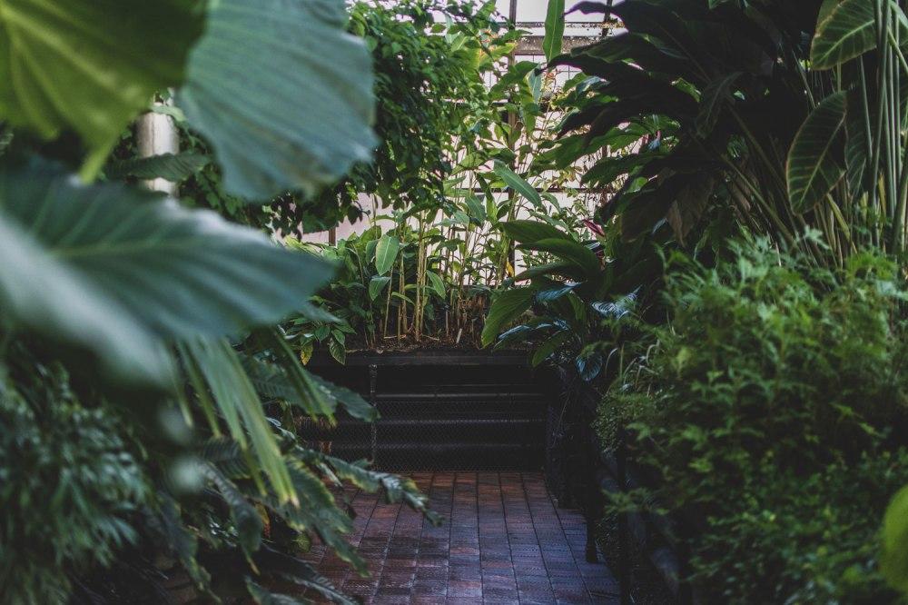 Glasgow-Botanic-Gardens (26)
