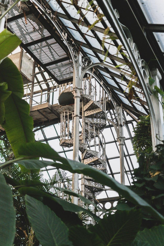 Glasgow-Botanic-Gardens (28)