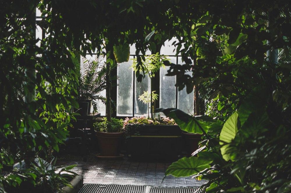 Glasgow-Botanic-Gardens (32)