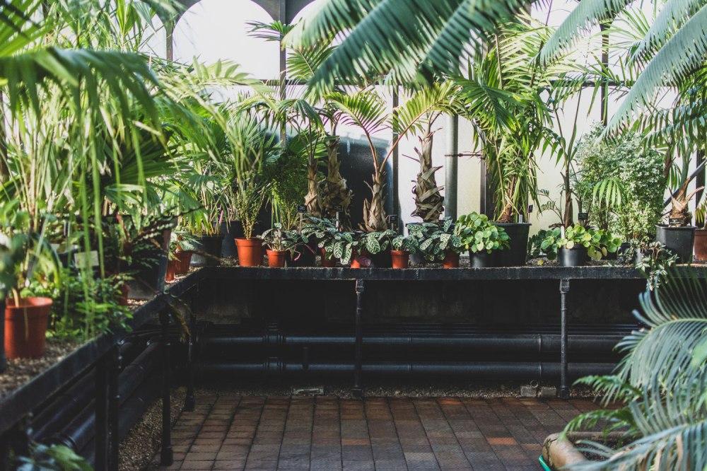 Glasgow-Botanic-Gardens (33)