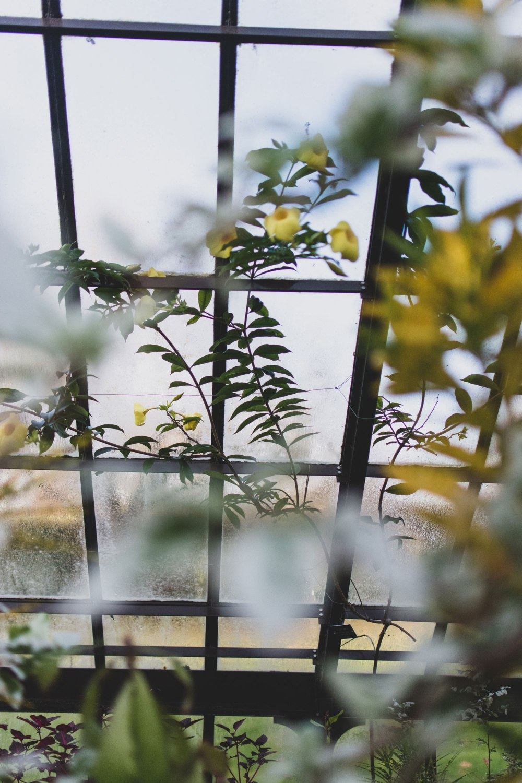 Glasgow-Botanic-Gardens (38)