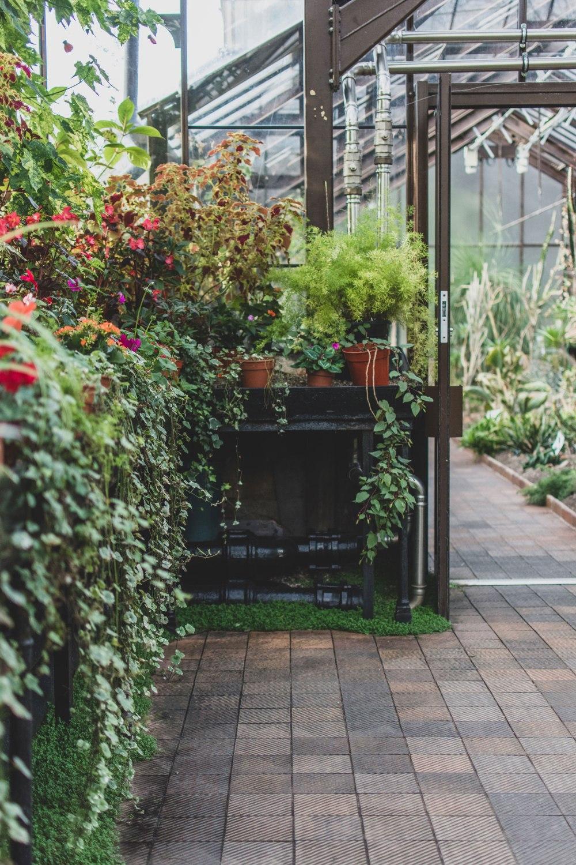 Glasgow-Botanic-Gardens (4)