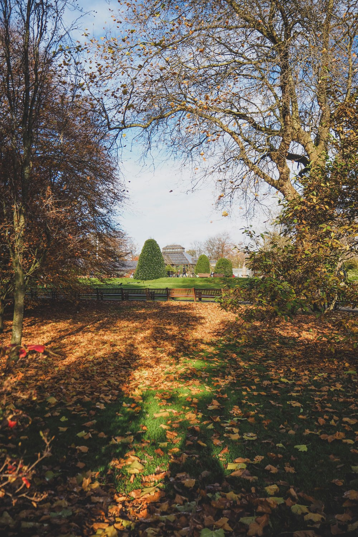 Glasgow-Botanic-Gardens (4).jpg