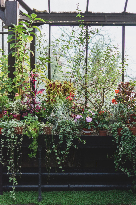 Glasgow-Botanic-Gardens (6)