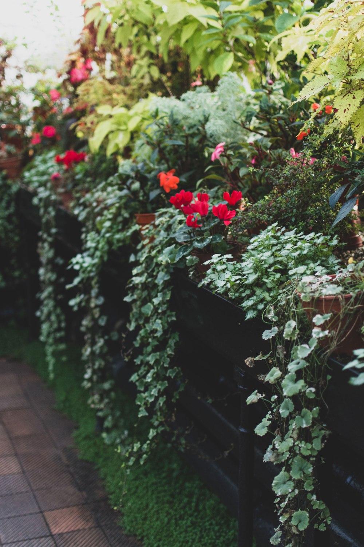 Glasgow-Botanic-Gardens (8)