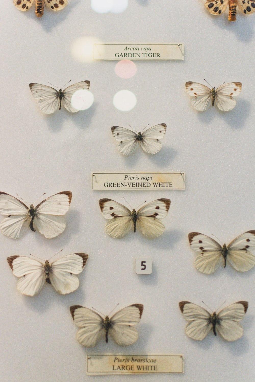 Hunterian-Museum-Glasgow (11)