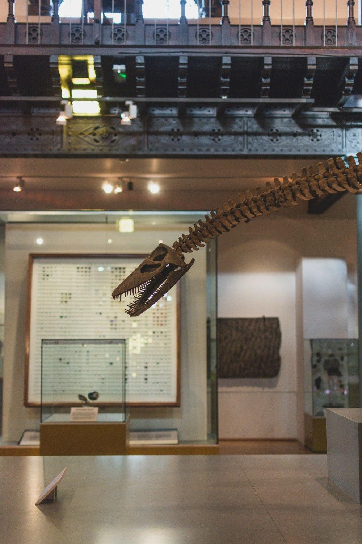 Hunterian-Museum-Glasgow (17)