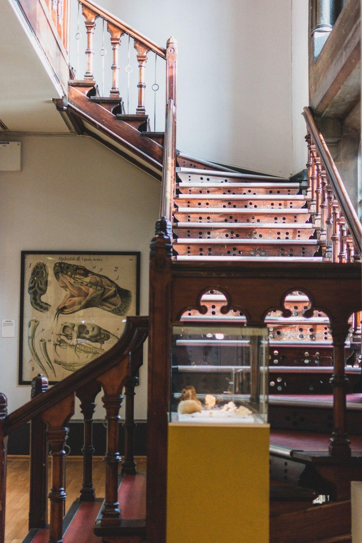 Hunterian-Museum-Glasgow (21)