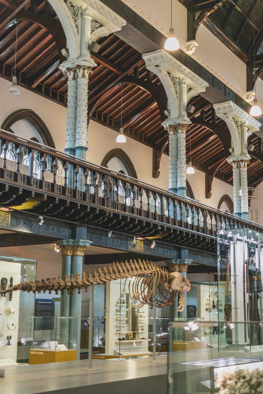Hunterian-Museum-Glasgow (22)