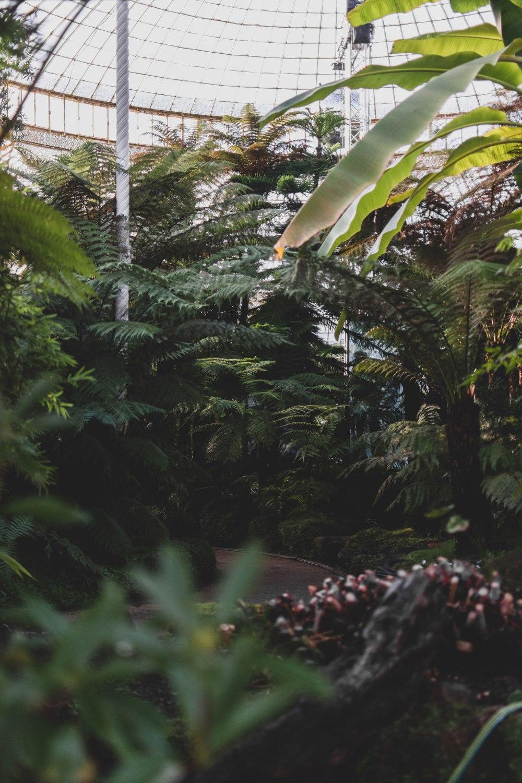 Kibble-Palace-Glasgow-Botanic-Gardens (18)