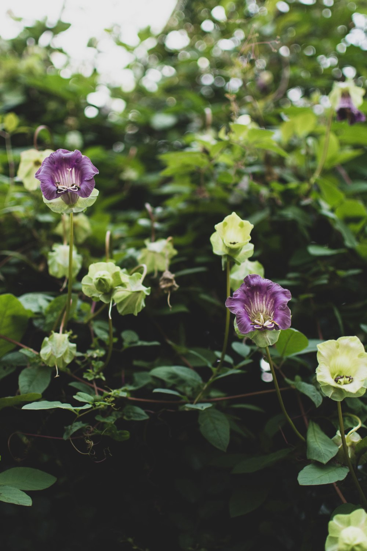 Kibble-Palace-Glasgow-Botanic-Gardens (24)