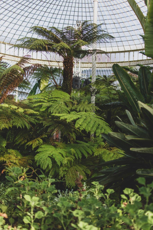 Kibble-Palace-Glasgow-Botanic-Gardens (25)