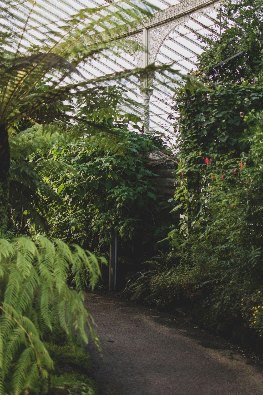 Kibble-Palace-Glasgow-Botanic-Gardens (27)