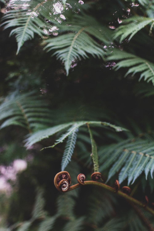 Kibble-Palace-Glasgow-Botanic-Gardens (34)