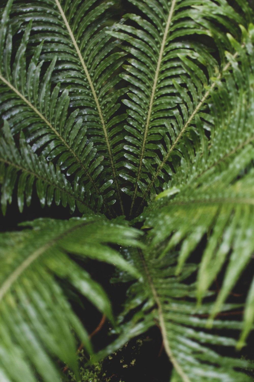 Kibble-Palace-Glasgow-Botanic-Gardens (38)