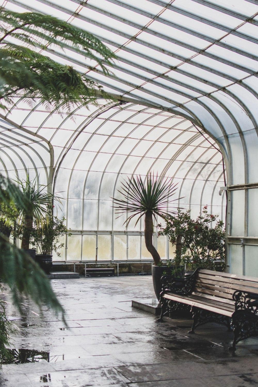 Kibble-Palace-Glasgow-Botanic-Gardens (7)
