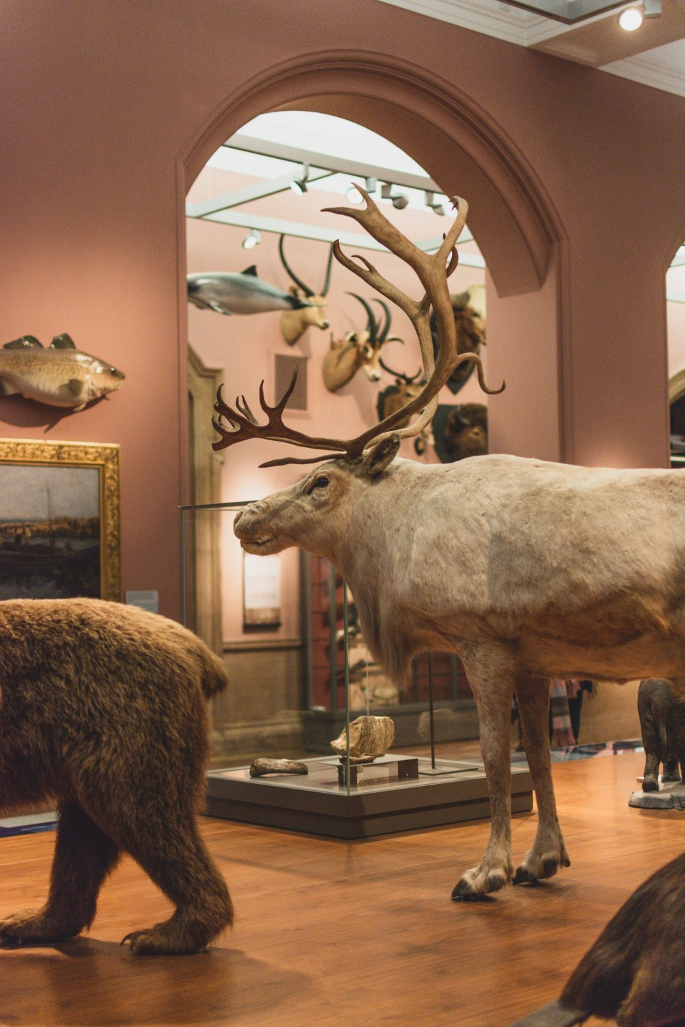 Kelvingrove-Art-Gallery-and-Museum-Glasgow (36)